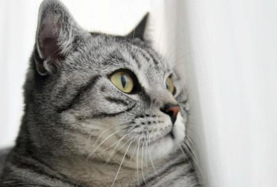 【別再相信這些!】寵物主人最常犯的8大迷思