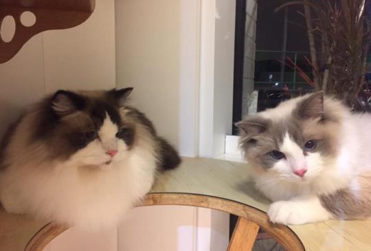 【喵星人】有看過這兩隻貓嗎?
