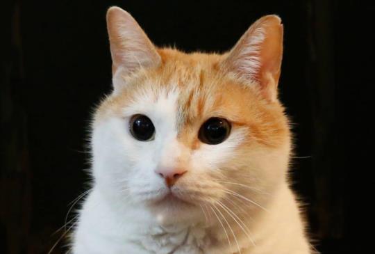 【黃阿瑪的後宮傳奇: 那些貓咪教我的事, 每個生命都很可貴!】