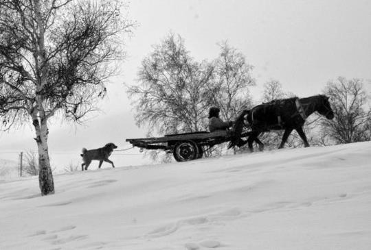 內蒙壩上之旅-黑與白
