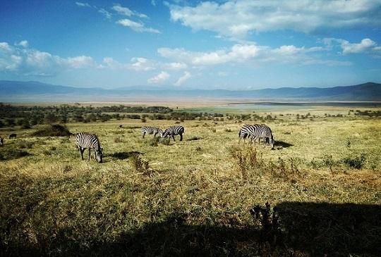 【東非.坦尚尼亞】恩格龍格魯自然保護區 - 火山口裡自給自足的生態系