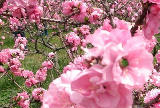 【台中】武陵農場12個私房景點大公開