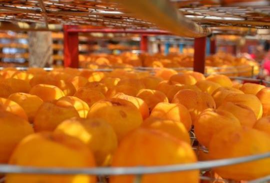【攝影展】來新竹吃好吃的柿餅
