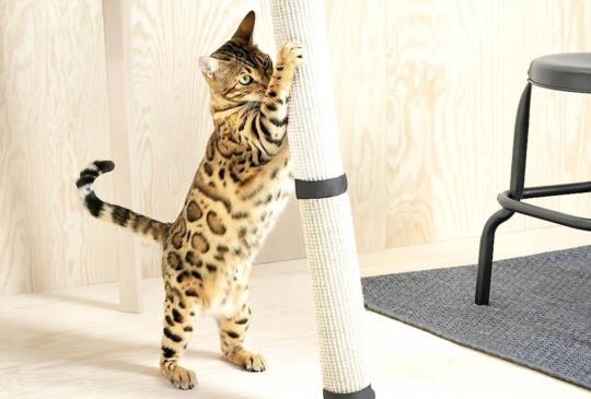 【毛孩也要北歐文青風】IKEA LURVIG寵物家具預計明年在台上市
