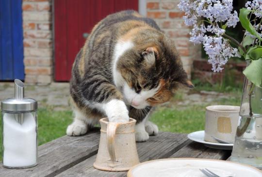 用屁股走路好可愛?!小心,貓咪可能正在留下「痢屎」痕跡
