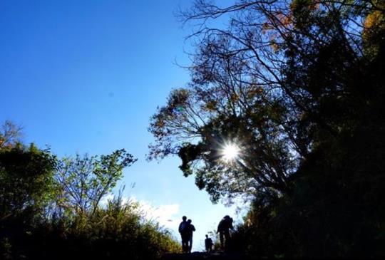 漫遊撼動心靈的巨木森林,沈浸在上帝的部落【司馬庫斯】