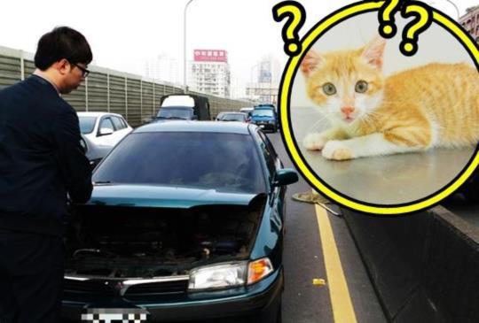 【驚險】64快速道路上小貓卡輪軸 雖回堵好心人同動保員一起救貓