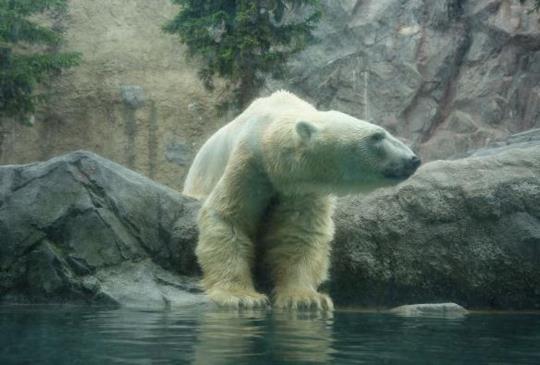 【日本.北海道】日本最受歡迎,充滿愛與幸福的「旭山動物園」