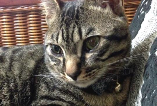【寵物小學堂】喵星人也會有壓力!?(上) 如何發覺貓咪有壓力