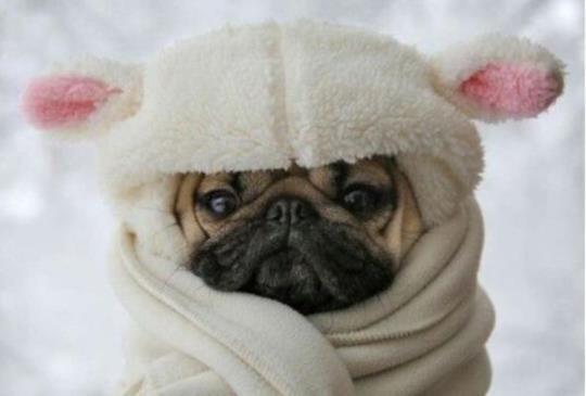天氣變冷時,除了保暖,也要留意狗狗是否有緊迫症狀
