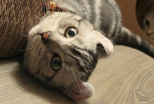 【毛爸媽必學】寵物六大緊急傷病的簡易處理法