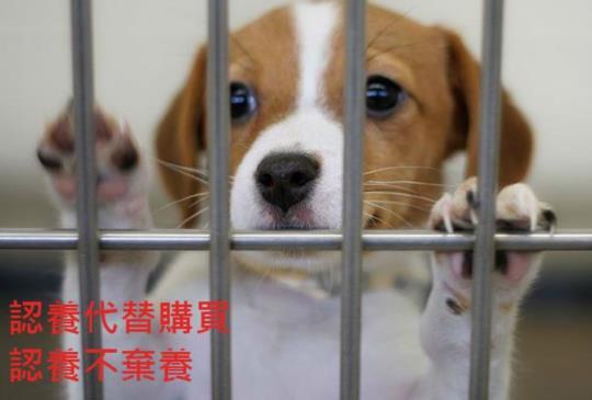 【幸福小棧延續愛】員工送養流浪犬貓,老闆發獎勵金