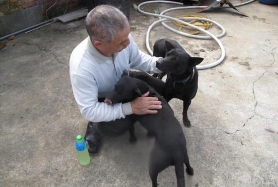 誰說米克斯不聰明?最有架式的小黑牧羊犬,當起小小尖兵顧家趕羊樣樣來。