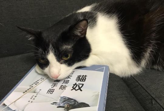 【貓奴必修】打造人貓共同的舒適環境