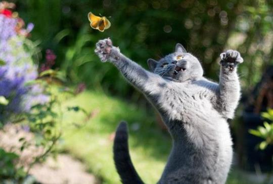 【貓咪攝影停看聽】別讓逗貓棒變成兇手!