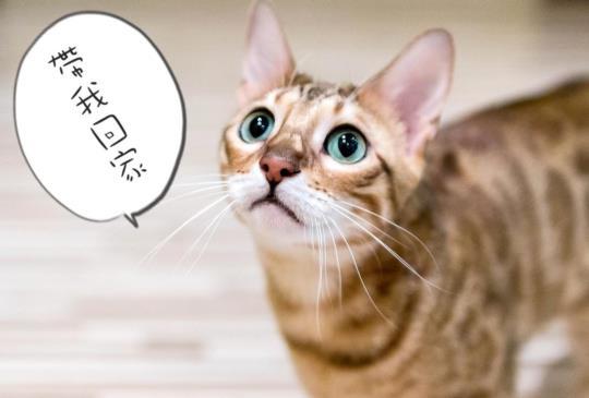 【貓狗撿史】貓咪和狗狗怎麼從遠古生物,逐漸演化成家中人人疼愛的毛孩?