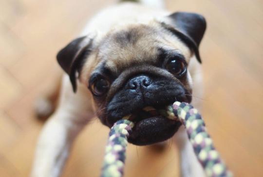 十大與狗狗的NG互動,這些壞習慣,你犯了嗎?(上)
