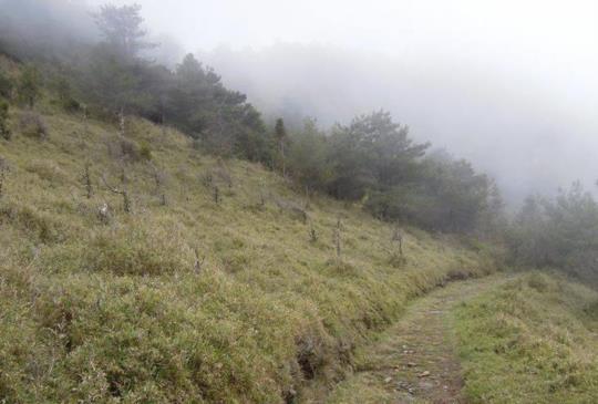 【南投】大山我來了!瀟灑走入鹿林山、麟趾山的幽境