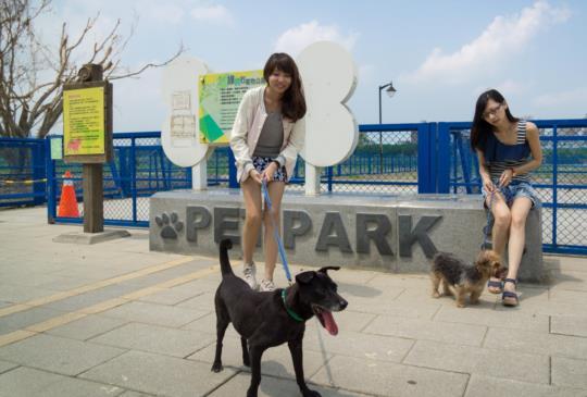 【炎夏寵物兜風 】夏天遛狗注意事項,你做到了嗎?