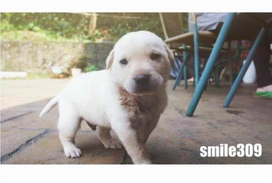 留下你和牠的微笑吧!蘇澳「微笑309民宿」