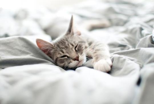 【動物行為專家提醒】貓咪吸吮布料動作「敲可愛」但必須注意....⚠