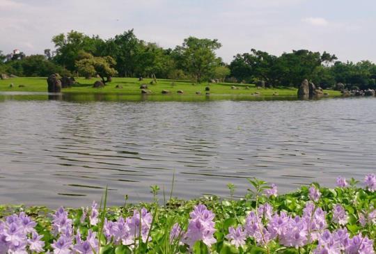 【宜蘭】台灣的兼六園:羅東運動公園