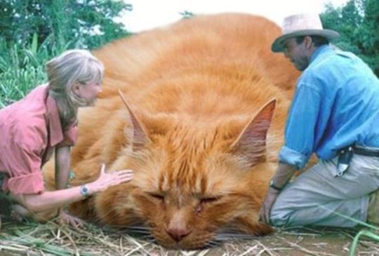 【侏羅紀喵園】也來了!但這根本是貓奴天堂,完全不想跑啊~