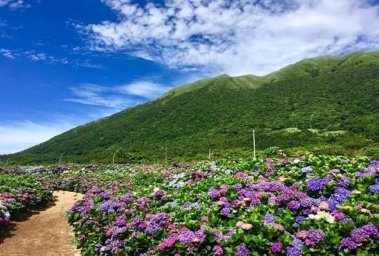 全台繡球花景點大公開,夢幻繡球花季一起浪漫一夏!