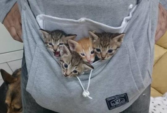 換季大作戰,保暖你的貓