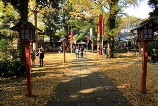原來東京也有這種地方!在東京尋找大自然的療癒綠洲景點4選