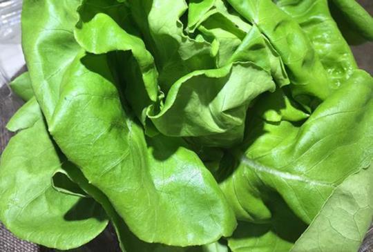 毛小孩的天然維骨力二:荸薺與深綠色蔬菜