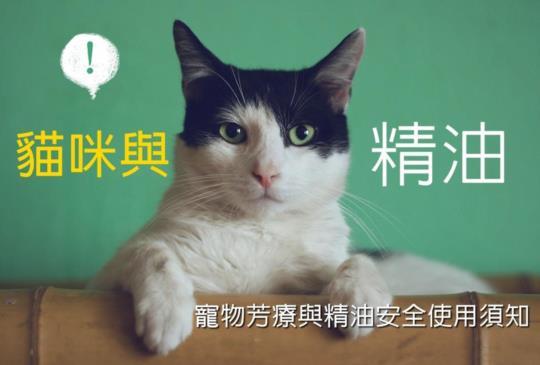 【精油專家告訴你】貓狗可以使用精油嗎?(上) 寵物精油安全須知