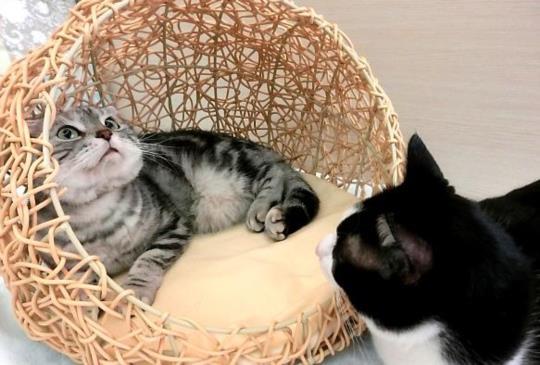 【你家有了沒】耐抓耐咬好清洗的時尚手編寵物窩