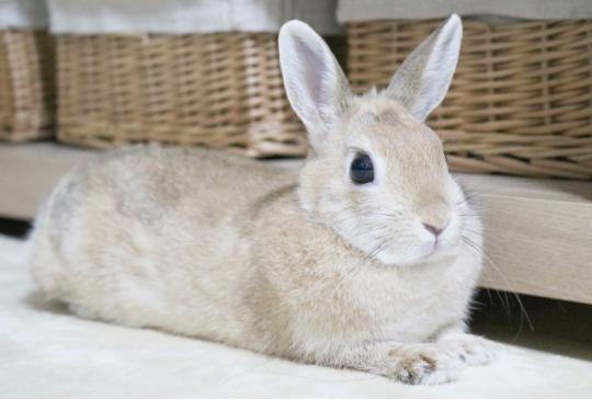 讓女生們發瘋的療癒系兔兔!一舉一動都萌到妳的心坎裡~