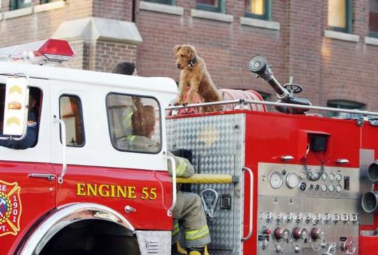 【《我家也有消防狗》不只是人,動物也有自己的興趣與理想】