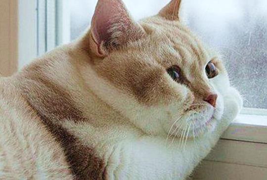 【健康知識】別再瘋「阿嬤養的貓」!一招迅速DIY檢測貓咪是否過胖