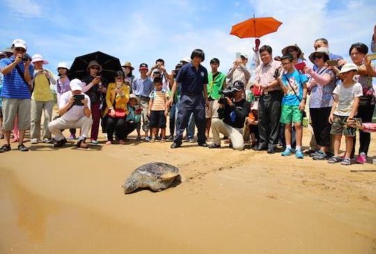 世界海洋日,讓我們一起保護海洋,拯救綠蠵龜!