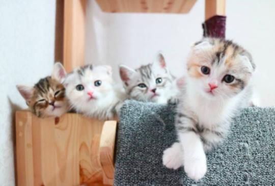 網路上爆紅的這群貓,你追蹤了嗎? 還沒你就太落伍啦!