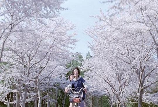 【春天  一窺4部電影裡的櫻花飛舞吧】