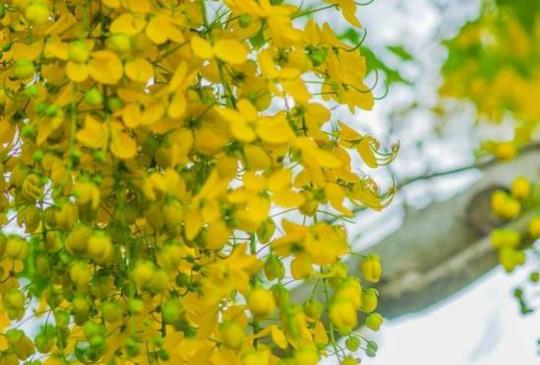 【花東縱谷分享「看不見的亮點」 讓網友大讚認同!】