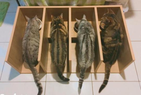 【貓咪拉麵館】貓咪麵館DIY正夯,達人教你自製貓咪食堂