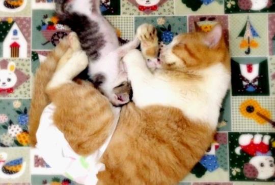 小心!不可不知的寵物居家安全陷阱
