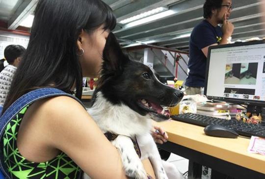真正從裡到外推動寵物是家人的媒體巨擘:東森新聞雲