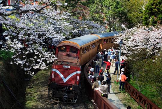 阿里山交通攻略|從嘉義市區如何前往搭乘小火車賞日出/雲海再賞櫻花!