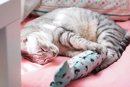 【貓奴幸福空間】輕鬆打造讓貓孩愛的小窩