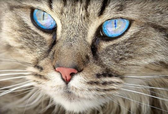 【最新特定寵物業管理辦法】飼主/業者要注意的重點看這裡