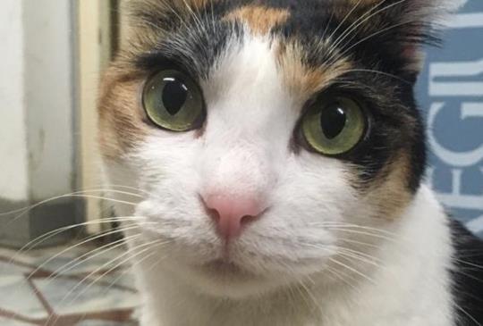 【抱抱貓咪2】要把貓咪抱起來也是有學問的!