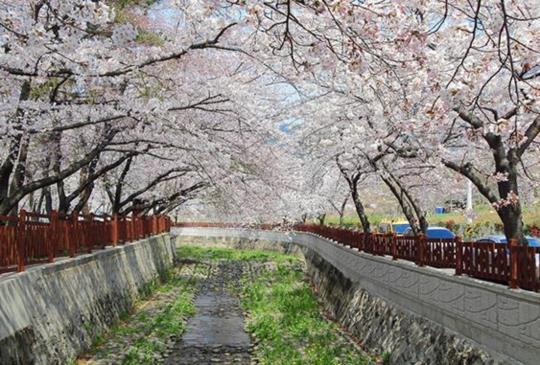 高雄旅展送萬張韓國機票 出示樂活卡免費入場