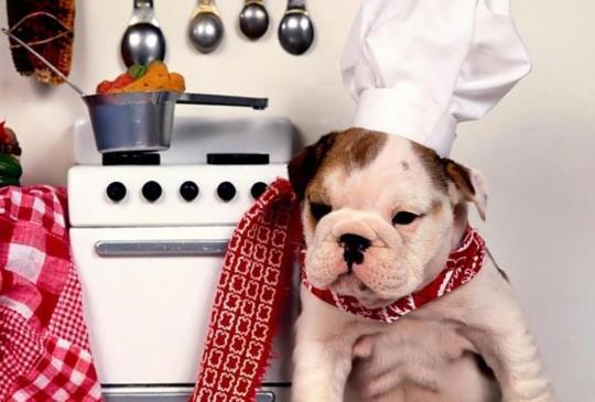 【DIY寵物食譜】寵物年菜自己動手做