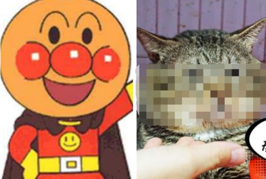 《已認養》【貓咪找家】可愛麵包超人胖虎🦁你絕對沒看過的超圓臉貓老大😂